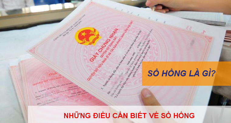 So Hong La Gi Nhung Dieu Can Biet Ve So Hong 1